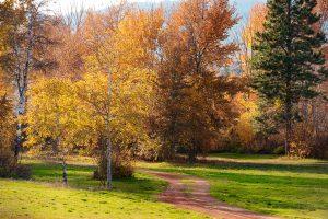 Merritt BC Moonshadows Rv Park