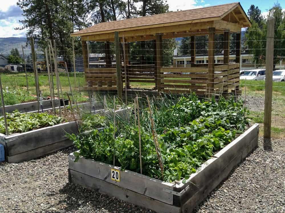 growing food, community garden, garden plot, vegitables
