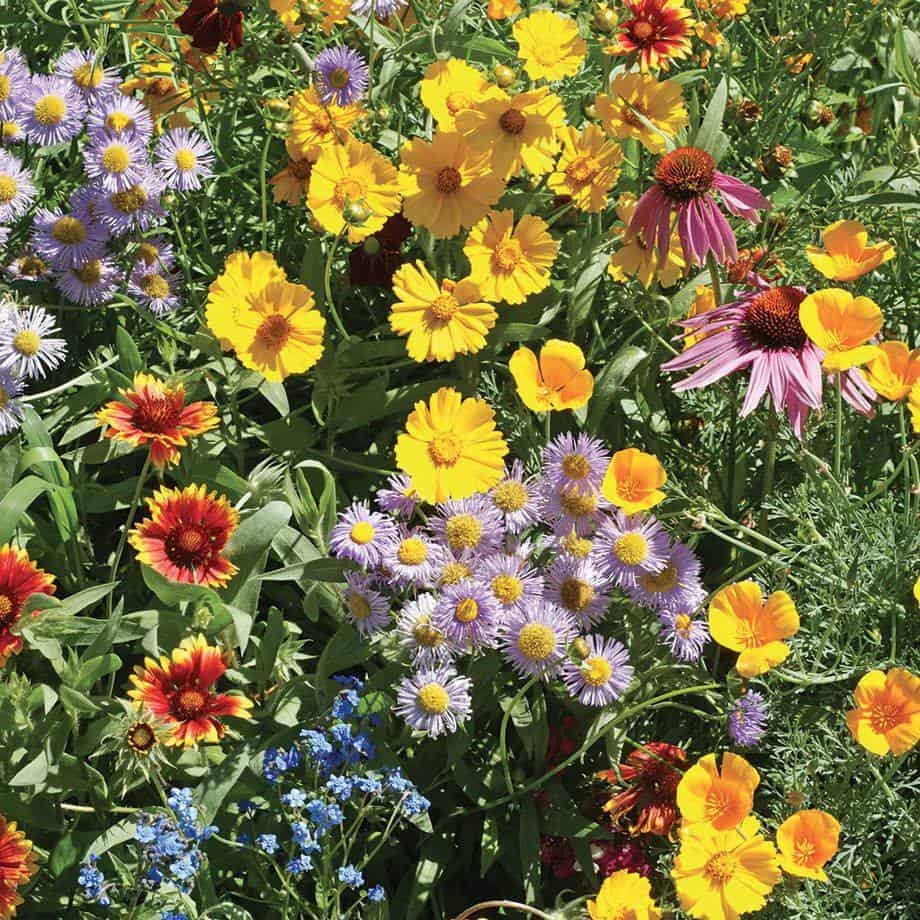 native wildflowers bees pollinators