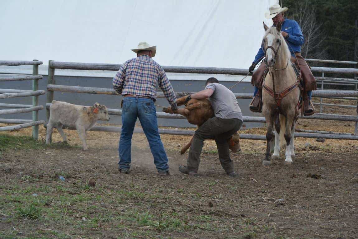 Ranching in the Nicola Valley - Branding Day