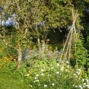 established forest garden