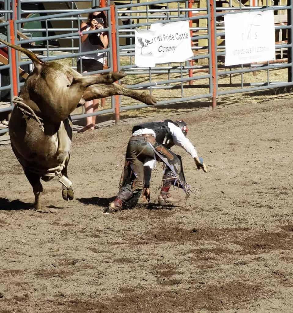 Nicola Valley Rodeo.