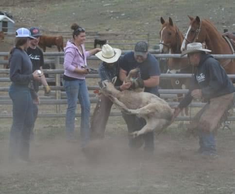 Merritt Rodeo