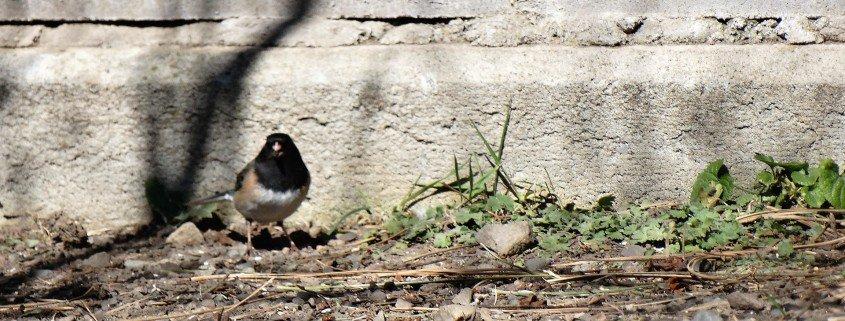 birding in merritt