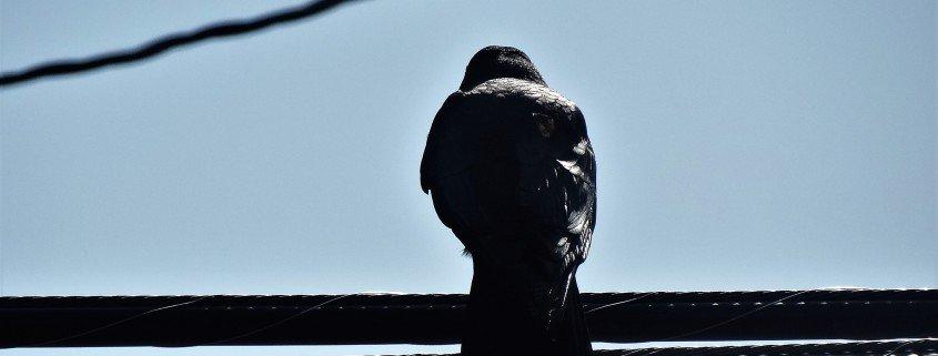 merritt bc birdwatching