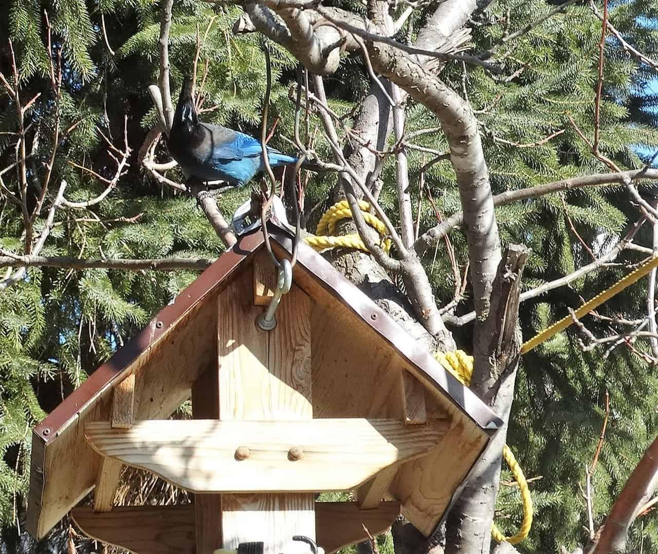 birdwatching in merritt bc canada