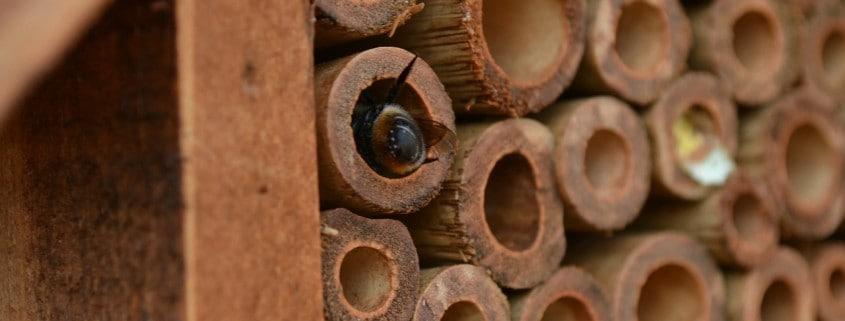 nesting mason bees in merritt bc