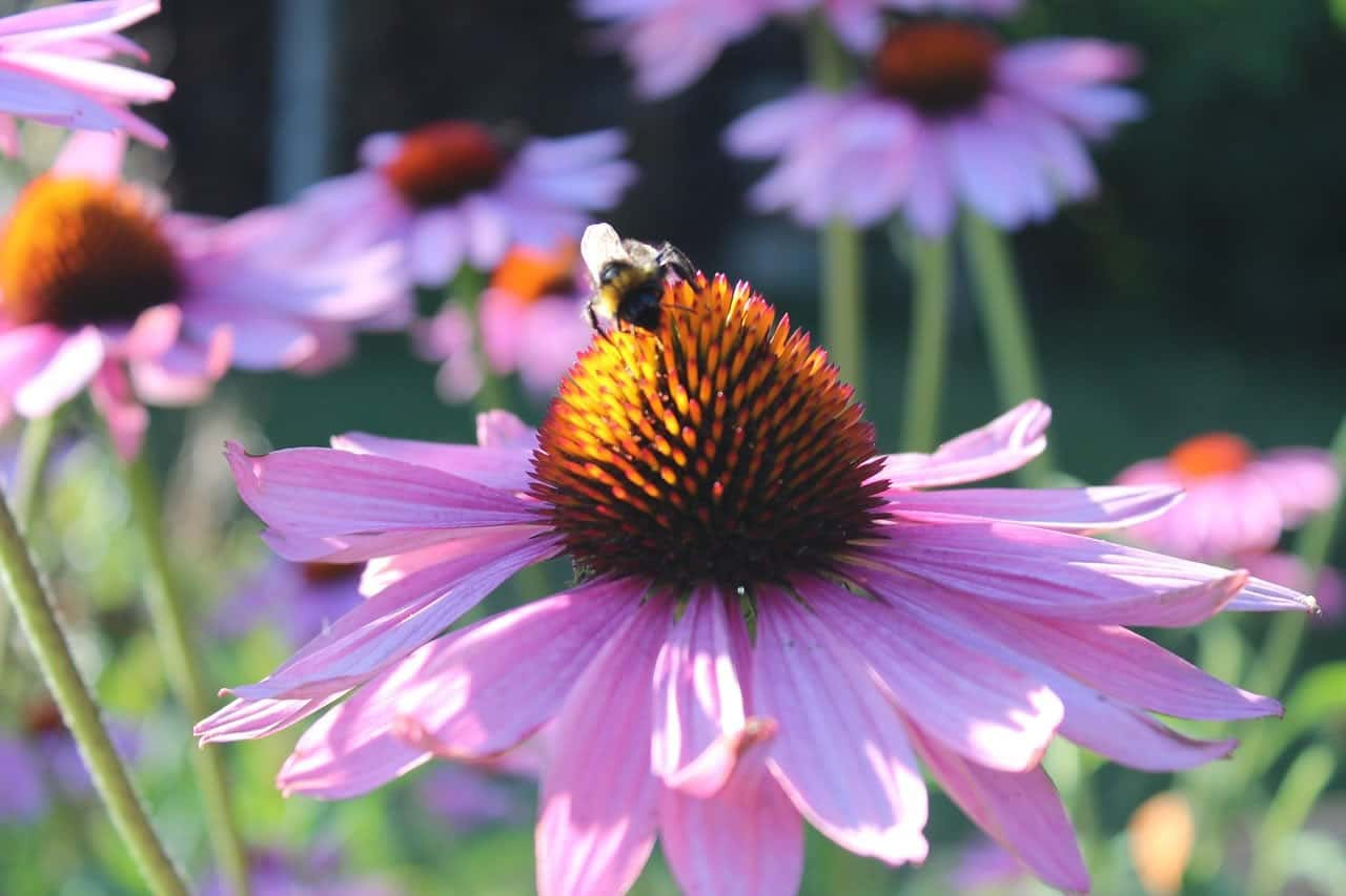 mason bees in merritt bc