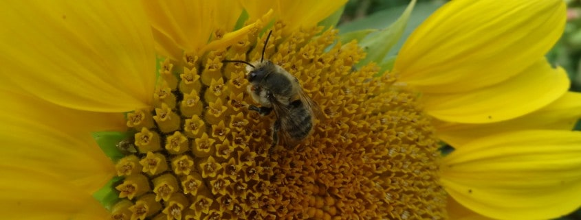 Experience the Buzz in the Nicola with bees