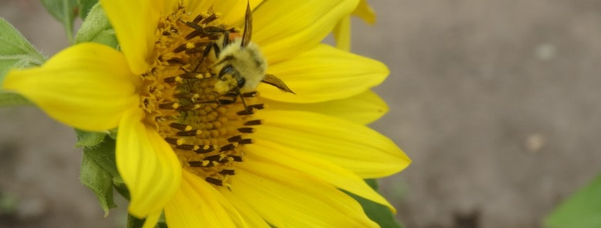 Experience the Buzz with bees