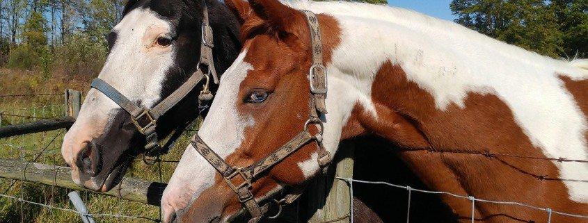 merritt saddle maker