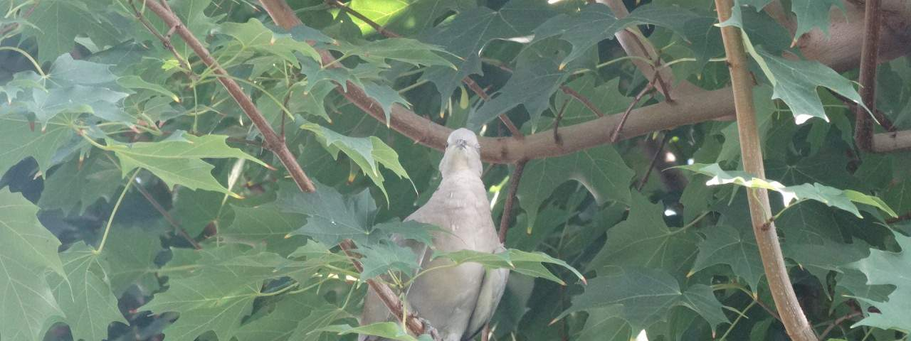 backyrad birdwatching in merritt