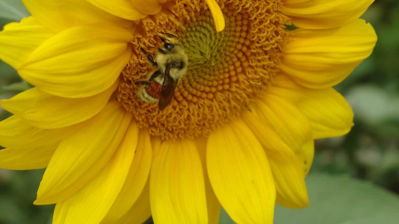 Going Bee Crazy