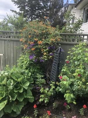 Perrenials Garden