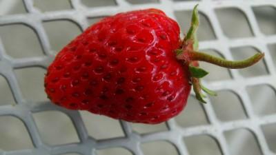 berry picking merritt bc