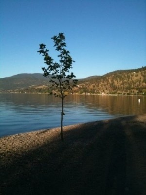 Peachland waterfront